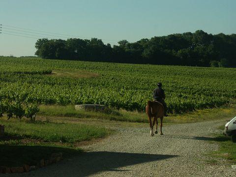 Chemin de balade au départ du CRF Equine